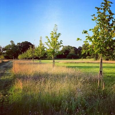 Create green burial sites says public health expert