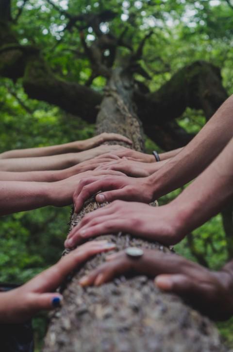 My Tree Charity